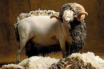 laine-mouton-isolation-comble-perdu-thermique-devis-quimper-concarneau-douarnenez-fouesnant-quimperle